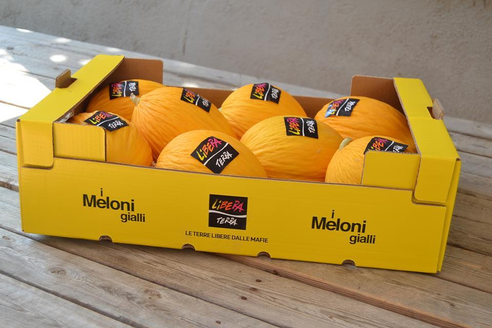 meloni gialli libera terra